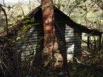 JJ's Abandoned Cabin 2013